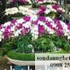 Chuỗi ảnh hội hoa xuân TPHCM, 2015